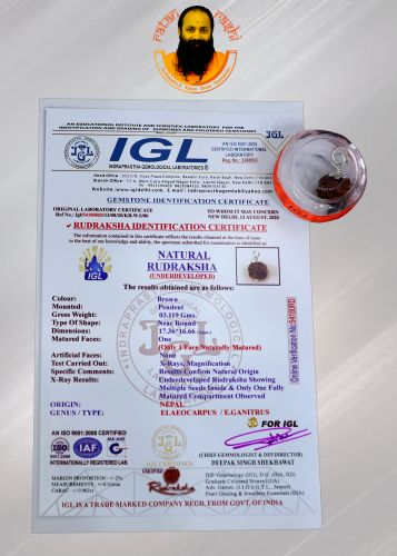 Rudraksha 5 Mukhi Brown -03.119 Carat Weight - Origin - Nepal