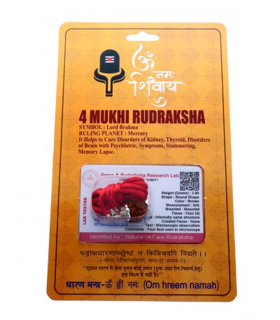Natural 4 Mukhi Rudraksha Shanka- 3.90 Gram  Weight - Origin - Nepal