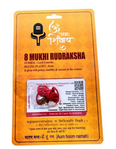 Natural 8 Mukhi Rudraksha Shanka- 1.77 Gram  Weight - Origin - Nepal