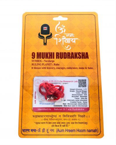 9 Mukhi Rudraksha - 1.71 Gram  Weight - Origin - Nepal